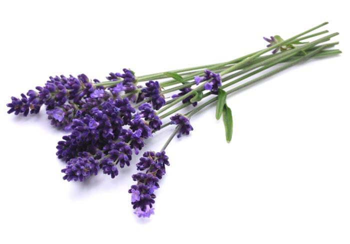 Lavanda - prirodni saveznik vašeg zdravlja